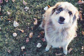http://www.veterinariocampagnalupia.it/wp-content/uploads/2015/11/vet_00005-320x213.jpg