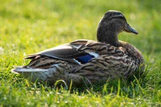http://www.veterinariocampagnalupia.it/wp-content/uploads/2015/11/vet_00006-320x213.jpg