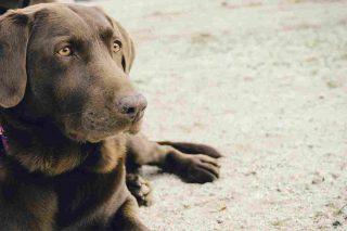 http://www.veterinariocampagnalupia.it/wp-content/uploads/2015/11/vet_00007-320x213.jpg