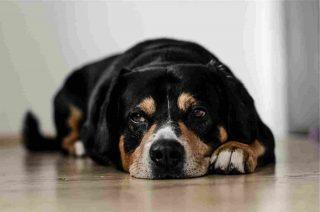 http://www.veterinariocampagnalupia.it/wp-content/uploads/2015/11/vet_00008-320x212.jpg