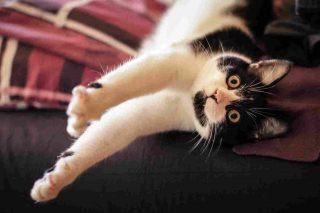 http://www.veterinariocampagnalupia.it/wp-content/uploads/2015/11/vet_00012-320x213.jpg
