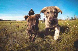 http://www.veterinariocampagnalupia.it/wp-content/uploads/2015/11/vet_00018-e1482422247257-320x212.jpg
