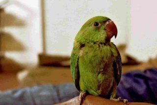 http://www.veterinariocampagnalupia.it/wp-content/uploads/2015/11/vet_00024-320x213.jpg